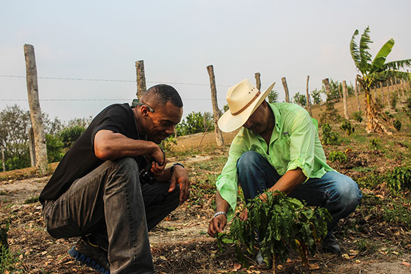 Roastmaster Felton Jones at Finca Terrerito inspecting coffee in field