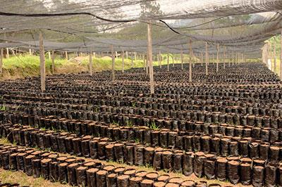 Planting coffee at Finca Terrerito
